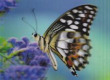 3 -D - Ansichtskarte: Distelfalter - sehr schöner Schmetterling - butterfly
