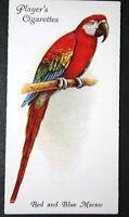 Scarlet Macaw   Superb Original 1930's Vintage Colour Card # VGC