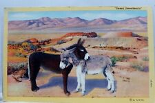 Animal Donkey Mule Desert Canaries Sweethearts Burro Postcard Old Vintage Card