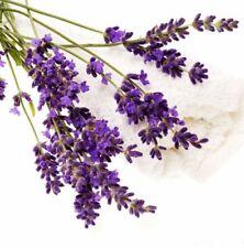 Lavender Seed 20 Seeds Lavandula Angustifolia Blue Lavender Lady Herb Seeds D010