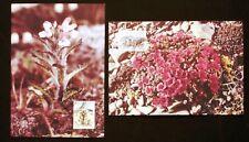 Greenland Maximum Card 1992.03.26. Arctic Flowers III - EXCELLENT