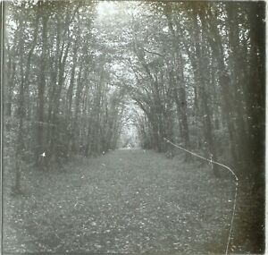Ballad IN Forest Nature Trees Artistic, Photo Stereo Vintage Plate Glass VR3
