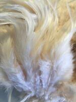 BULK 50pcs Cream Beige Rooster Feathers 9-13cm DIY Craft Millinery Dream Catcher