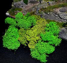 ISLANDMOOS; gereinigt; 35 g; Spur H0; Sträucher, Büsche, Hecken; S22G; Muwse