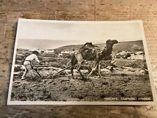 More details for real photo postcard.    camel plough, tenerife.       ref817