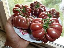 15 graines  semences TOMATE  DOM CAMILLO    seeds production bio France