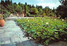 BG11289 verbania pallanza giardini di villa taranto fior di loto   italy