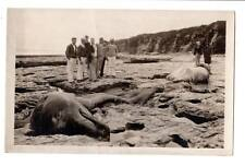 RPPC unusual dead dolphins whales porpoise men looking photographer camera