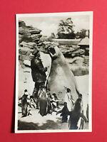 Foto AK HAMBURG Stellingen 1927 Carl Hagenbecks Tierpark See-Elefant   ( 48271