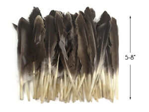 1 Pack - Natural Brown Duck Pointer Primary Wing Feathers Halloween Wedding
