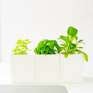 Set of 3 Modernistic Square White Planter Pots with Tray for All Desktop Plants