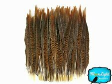 "Pheasant Feathers 50 16-18"" Natural Golden Pheasant Tail Feathers"