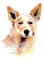 Australian Cattle Dog Aceo Card Print by A Borcuk