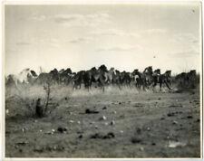 Wild Horses running 1931 Rare Vintage Original Stamped Press Agency Photo