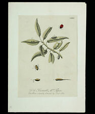 E. Albin Copper Stitch approx. 1720 Handcoloured Insects Copper plate Engraving