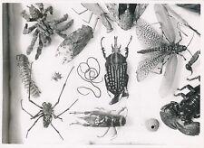GUINÉE FRANÇAISE c. 1940 - Insectes  Divers  - P 1334