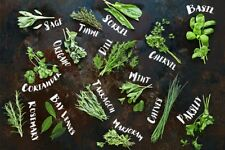 10 different varieties Aromatic spices culinary medicinal herbs seeds #2
