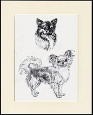 CHIHUAHUA LOVELY LONG COATED DOG SKETCH PRINT MOUNTED READY TO FRAME