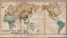 Landkarte map 1909: Verbreitung der Wichtigsten Pflanzen-Gruppen der Erde.