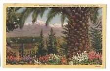 ORANGE GROVES SNOW CAPPED MOUNTAINS Winter In CALIFORNIA Postcard Linen
