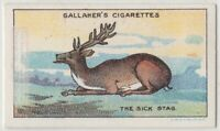 The Sick Stag  Aesop's Fable Moral Story 1920s  Ad Trade Card