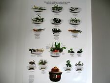 Vintage U. S. Forest Service Poster-Foods Can Keep You Alive-Plants 20x30 -1986