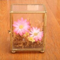 Glass Brass Box Home Decor Dried Flowers Container Display