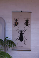Large Botanical Insect Beetle Specimen Educational Canvas Scroll Wall Hanging