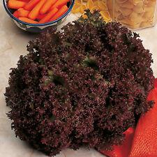 1g (approx. 1000) lettuce seeds LOLLO ROSSA old Italian variety, Heirloom