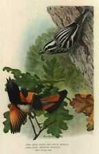 1902 Louis Agassiz Fuertes Chromolithograph Print - RedStart and B&W Warbler
