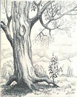 "Georges Henry TRIBOUT   """" étude d'arbres "" dessin original"