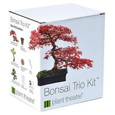 3 Bonsai Trees Growing Kit Complete Sowing Set Seeds Pots Silver Birch Red Maple