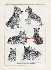 Australian Terrier Vintage Art Image Original 1934 Dog Print