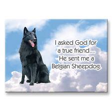Belgian Sheepdog True Friend From God Fridge Magnet Dog
