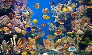 VLIES Fototapete-UNTERWASSER-WELT-(5097V)-Fische Koralle See Meer Tiere Ozean