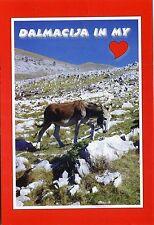 Alte Postkarte - Dalmacija in my heart