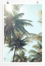 Poster Kokosnuss Palmen im Vintage Stil