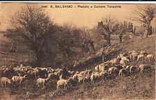 #CORNETO TARQUINIA: E. BALSAMO- PASCOLO-