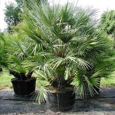 Exotische Baume Winterharte Gunstig Kaufen Ebay
