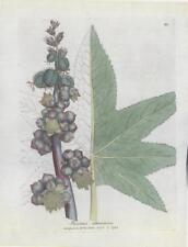 1790 Antique Botanical Print - RICINUS COMMUNIS Medical Botany (61)