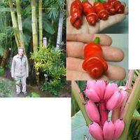 drei meiner Supersorten: Riesen-Bambus, Penis-Chili und Rosa Banane !