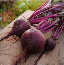 1 gram(about 70 pcs) vegetable Seeds Detroit Dark Red Beet (Beta vulgaris)