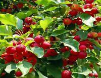Fruit Trees Fruit Tree CD Culture Orchard Farming 30 Books Pomology Gardening