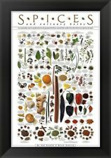 Spices and Culinary Herbs, by Ziegler/Keating, 40x28