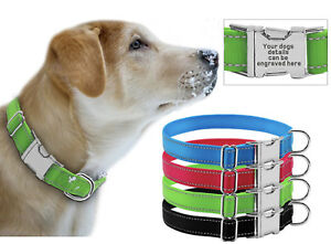 Omega - Reflective Nylon Dog Collar with Engravable Metal Buckle, 4 bright cols