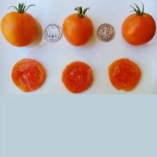 Jaune Flammee - Organic Heirloom Tomato Seed - Preferred by Chefs - 40 Seeds
