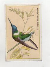 Chromo - Chocolat BESNIER - De Peretti - Le Mans - Oiseau Mouche  (J1166)