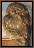 SLEEPY OWL cross stitch pattern PDF (point de croix)