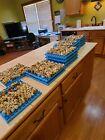 25 + Jumbo Cortunix Quail Hatching Eggs NPIP AND  IA certified