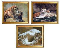 White Tigers Wildlife Animal Three Set 8x10 Golden Framed Art Picture Wall Decor